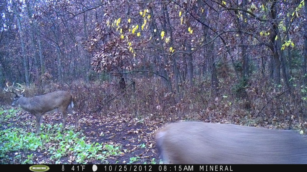 """Here is a picture of a buck I nicknamed """"Barkley"""".  In 2012 we aged him at 3 or 4 years old.  Would he make it to 2014?"""