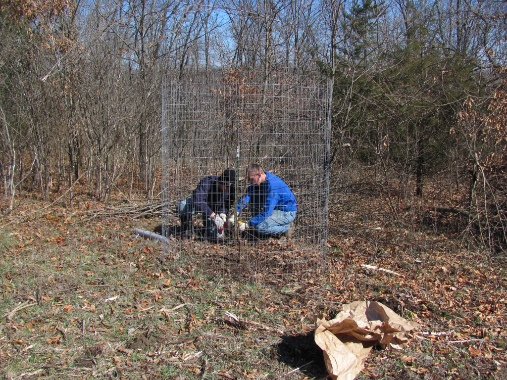 Electric fencing food plots iowa outfitters full