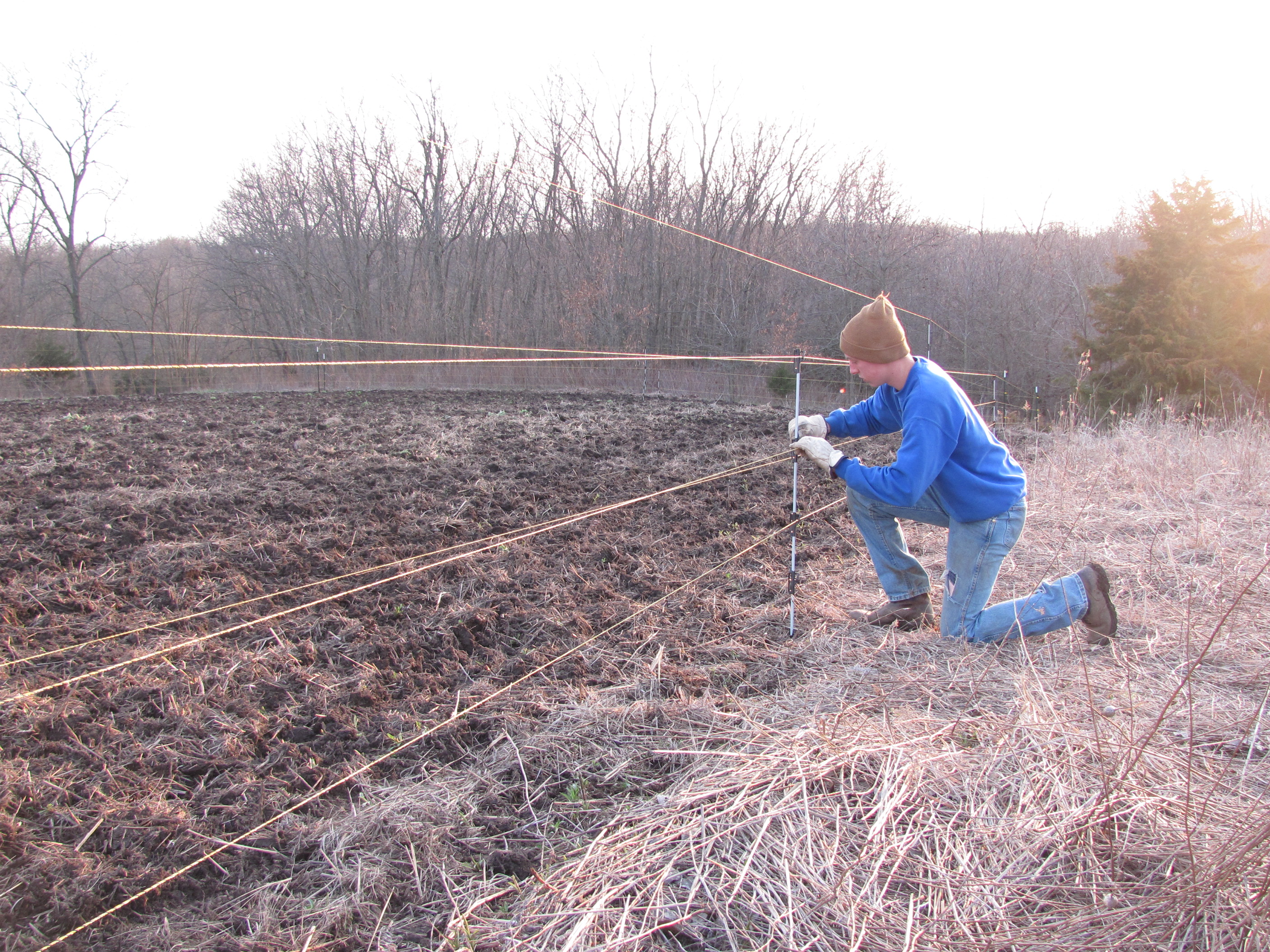 Here is Forest putting the finishing touches on our electric fence to ironically keep out the deer.