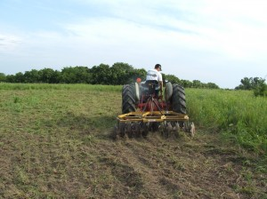 Planting brassicas begin with busting up the ground. Here, Anthony is breaking the ground by making a few passes with a disc. Spread the fertilizer and seed and drag in or disc very lightly.