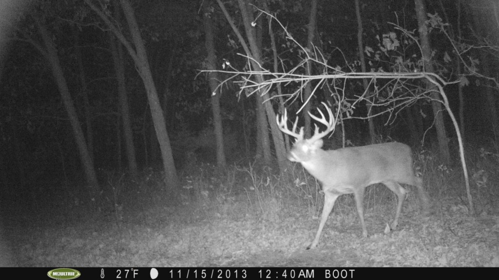 """First picture of the year of """"Barkley"""".  Two video clips to go along with the pictures.  Not a picture of this buck until mid-November.  Never assume these deer you pass up aren't there...it just takes time sometimes for them to show up."""