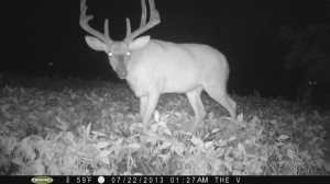 If you aren't getting mature buck pictures this time of year, don't worry just yet.  This year I have only a few pictures of what I would consider mature bucks...but I'm confident others including a few I'm watching for will show up soon.