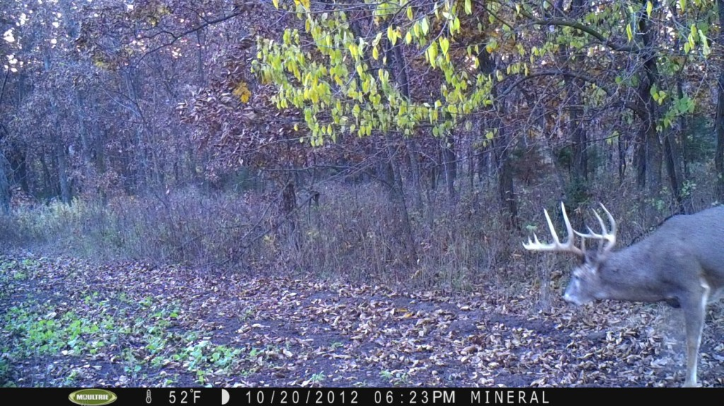 For some reason, every year around October 20th I start to see mature bucks both while hunting and on my cameras during daylight hours.  A few days later peak hunting starts to kick in!  This is my favorite time of year to hunt.