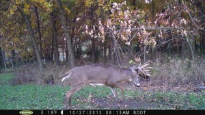 """One of hundreds of picks of daytime activity on """"The Boot"""" interior plot.  In this pic, a nice buck is pawing a mock scrape I made in early fall.  The plot and scrape were pounded all fall."""