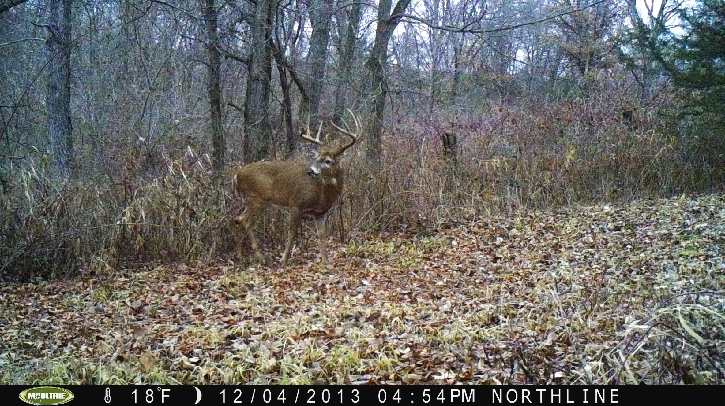 This nice buck showed up late this year.  No doubt, he was probably in the area all fall and I'm just now getting pics of him.  I think based on experience what happens is after the fall harvest, deer seek out the best food sources.  I spend a lot of time and effort making sure my grounds have the best most preferred food sources which is why I bring in deer this time of year.