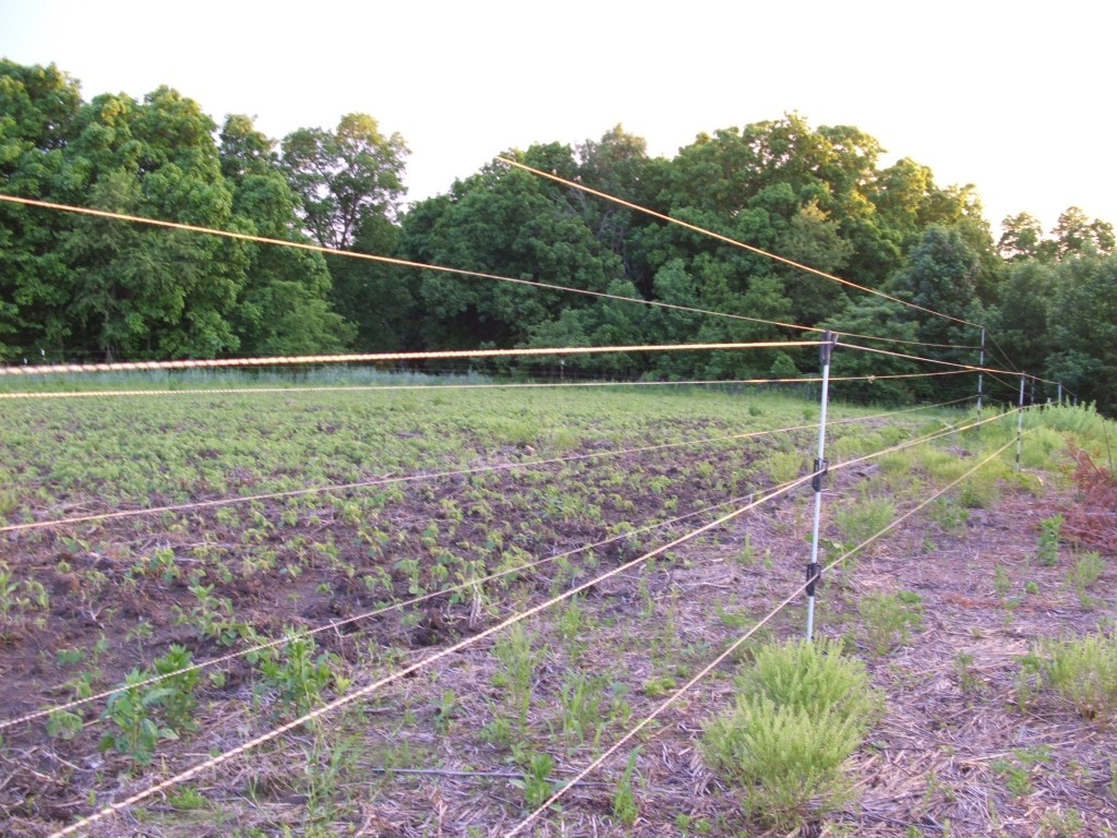 Electric fencing food plots