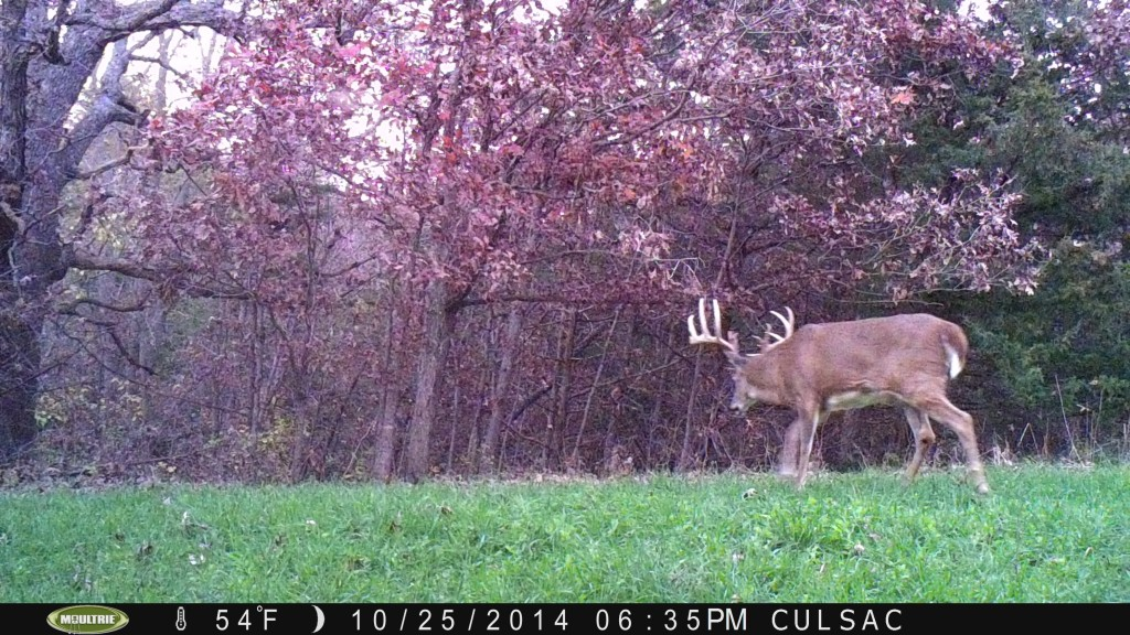October 25th and a good buck is on his feet during daylight on one of my interior plots.  That's why we plant and establish interior plots...big deer can't resist them.
