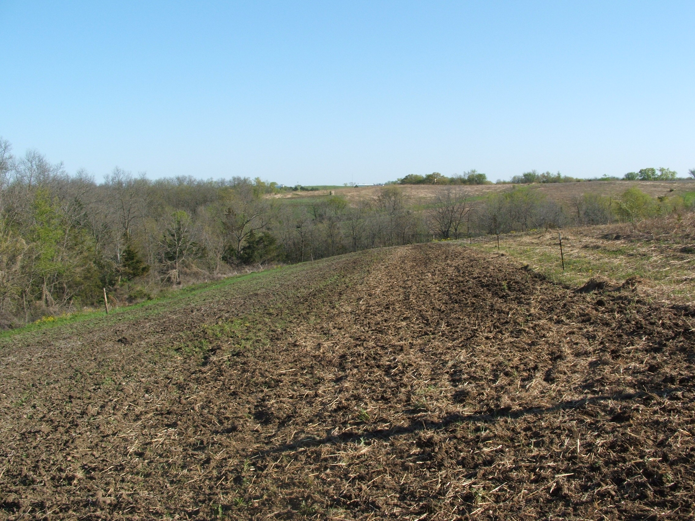 One of the finished food plots.  This plot is electric fenced in and planted in corn.  Just like the soybeans, I spread the corn seed and fertilizer and then disc them in.