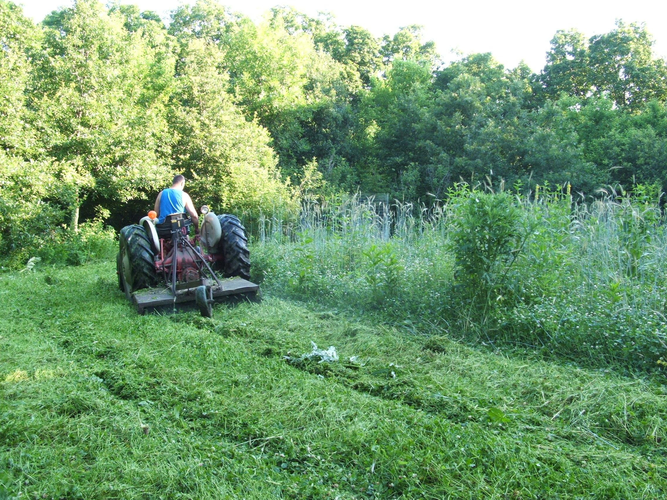 An interior clover plot that needs a good mowing.
