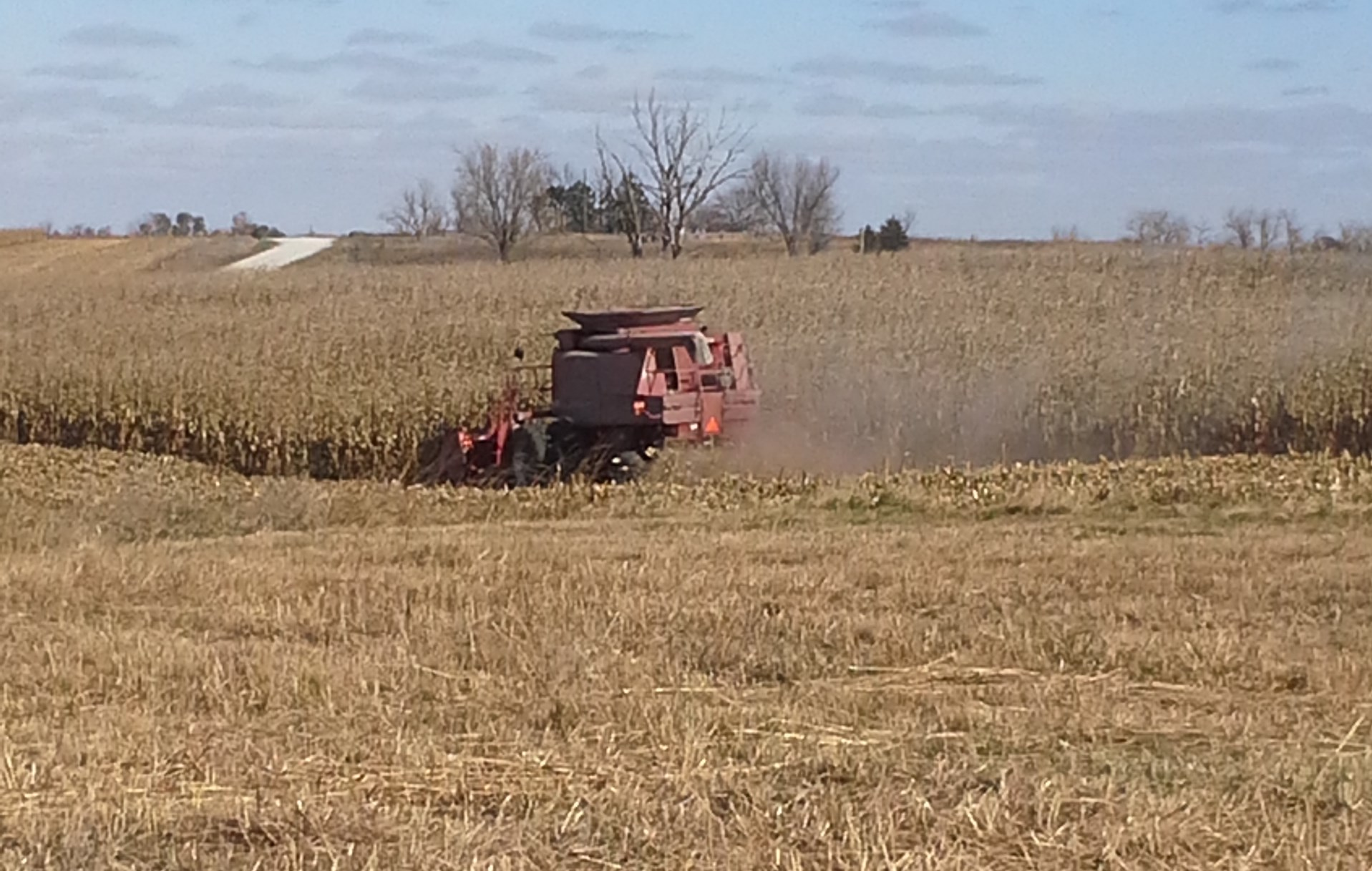 The fall harvest can drastically change deer activity and where they spend most of their time.  Today's modern harvest equipment leaves very little behind.