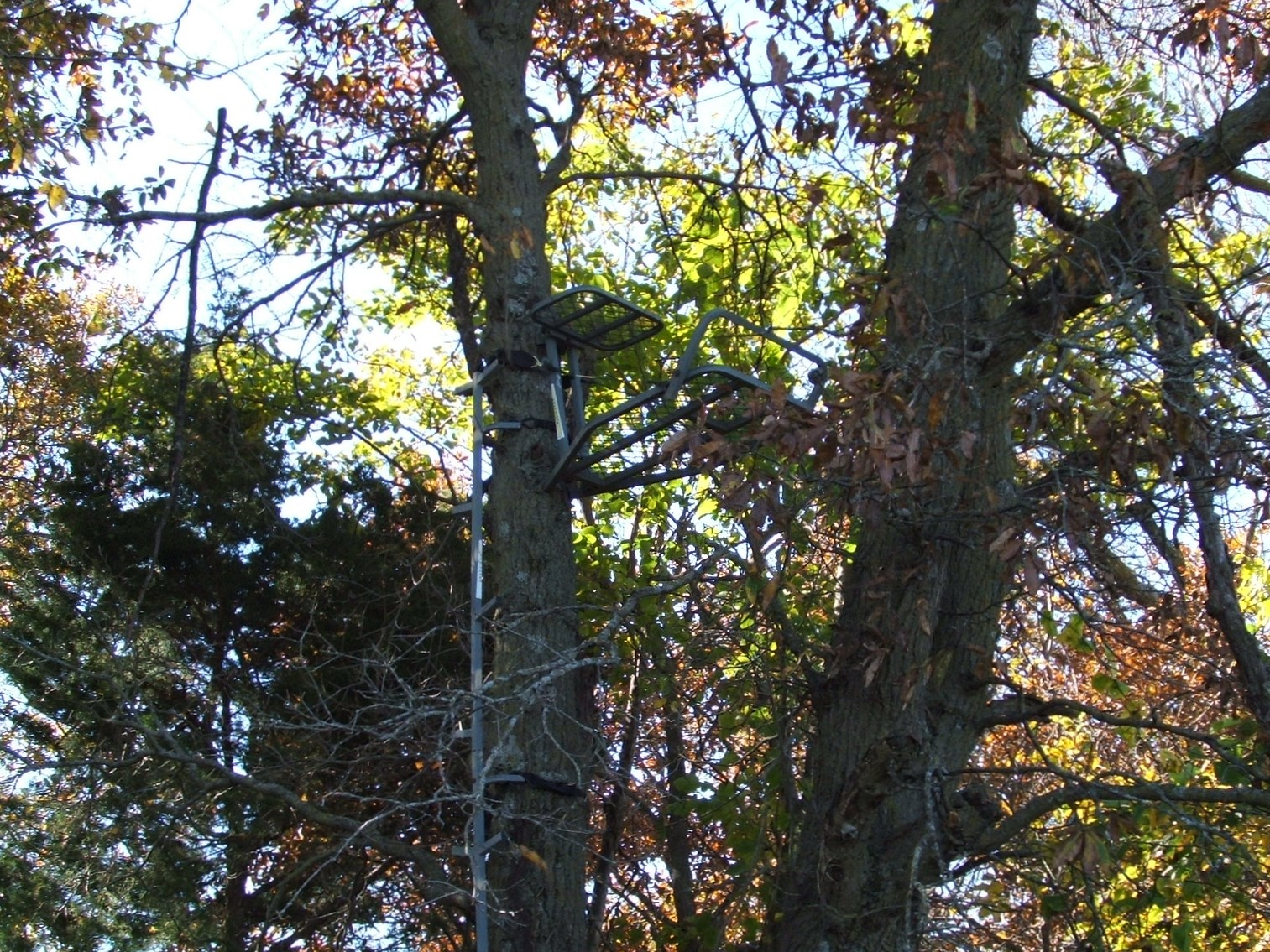 Enough tree stands or ground blinds are an essential item.
