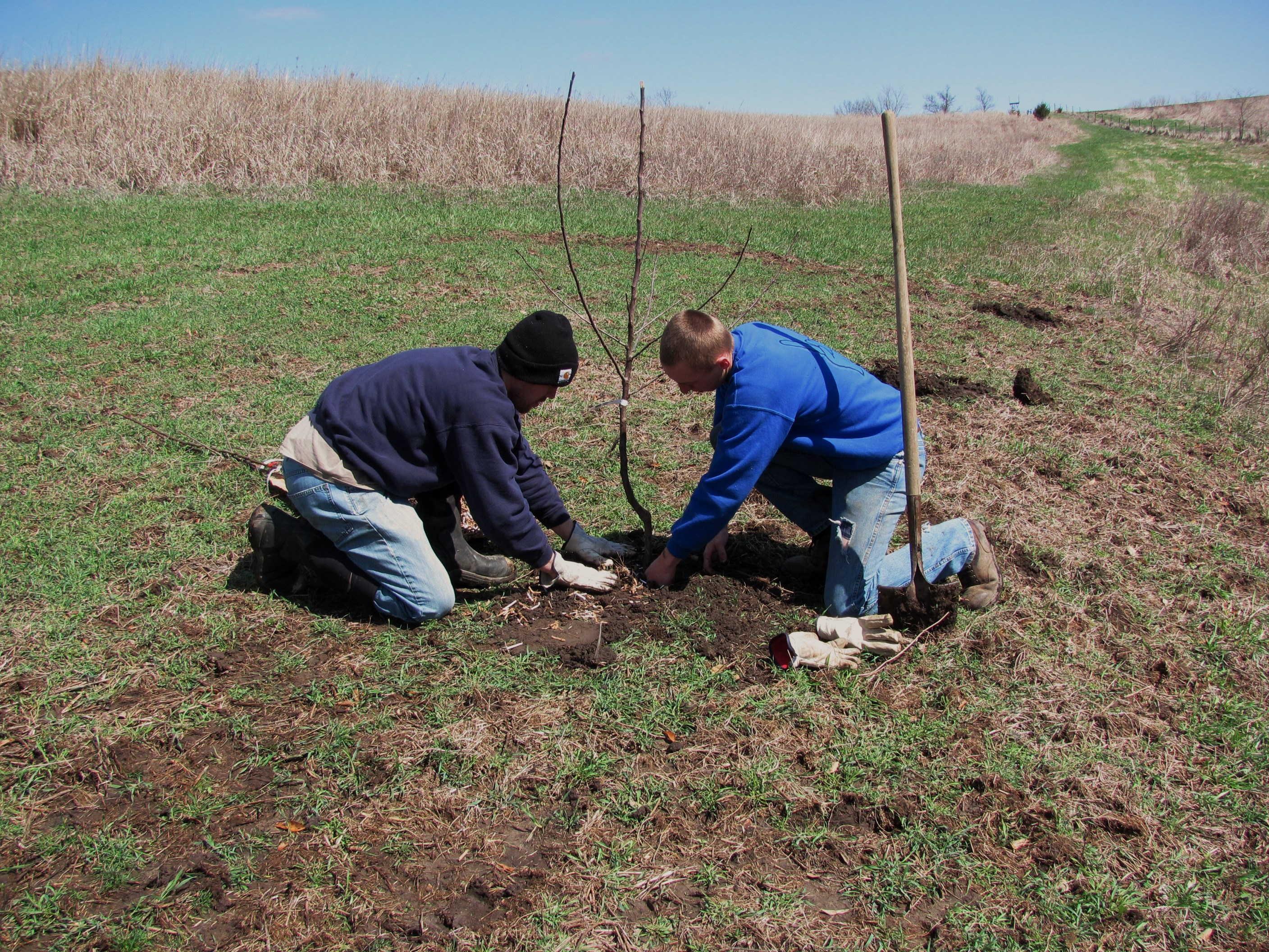 Improving habitat like planting apple trees will give you the highest return on your investment.