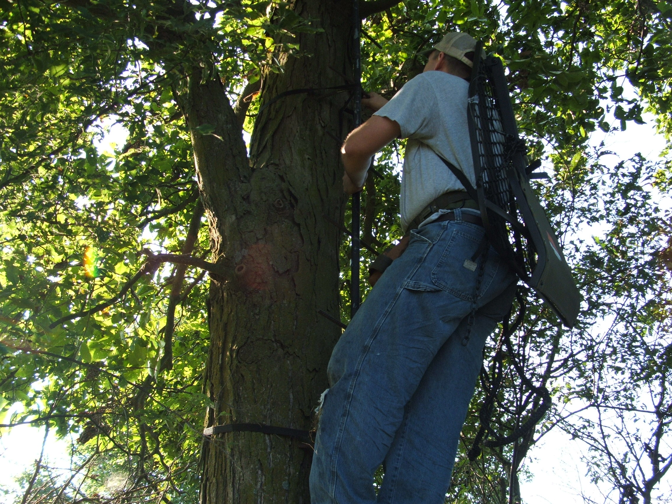 You must do one last tree stand inspection in late summer if your stands have been out all year.  I will replace any stand that won't pass a visual test...I also put 10 ton straps around each stand, and install full length life lines with prusik knots.  Any trimming is better done now last minute as opposed to doing it your first time in during the season.