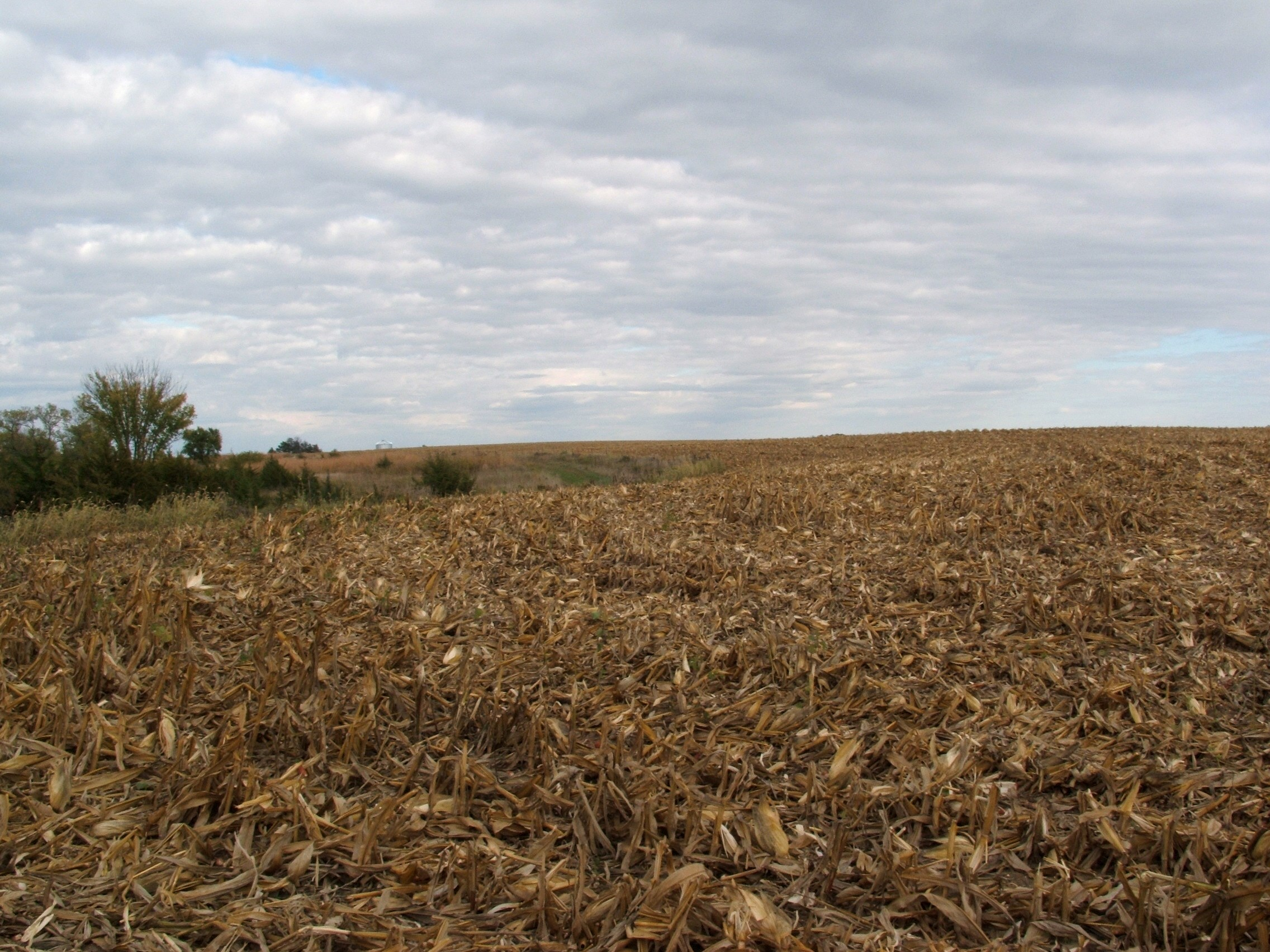 A freshly cut corn field will draw deer heavily right after harvest. You must move in on these prime food sources fast...in only a few days and the lure of this cut corn could be gone.