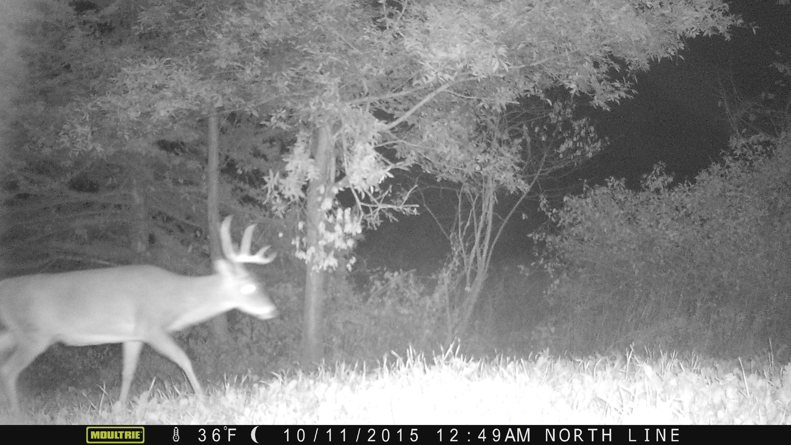 """In 2015, """"Cross Over"""" lost one side of his rack very early in the season...but he was a home body for sure. I have a ton of pictures of him and the hunters saw him numerous times last year."""